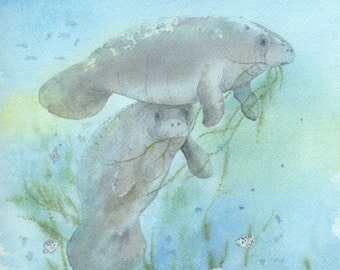 Print open edition 8 by 10 Florida manatee bowman sea cow Lunch Crowd