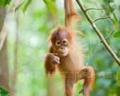baby animal prints, JUNGLE BABY ANIMALS, Set of 3 Photos, Safari Nursery Art, Orangutan, Gorilla, Chimpanzee, Kids Room, Baby Monkey, Green