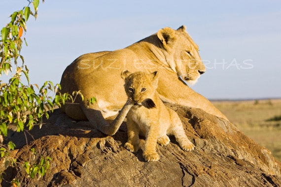 BABY ANIMALS PLAY Prints, Animal Nursery Decor, Set of 4 Photos, Orangutan, Cheetah, Lion, Wildlife Photography, African Safari, Zoo