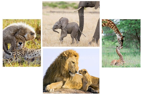 safari nursery art,  BABY ANIMALS, Set of 4 Photos , Elephant, Lion, Cheetah, Giraffe, Baby Animal Photography, Wall Decor, Kids Room