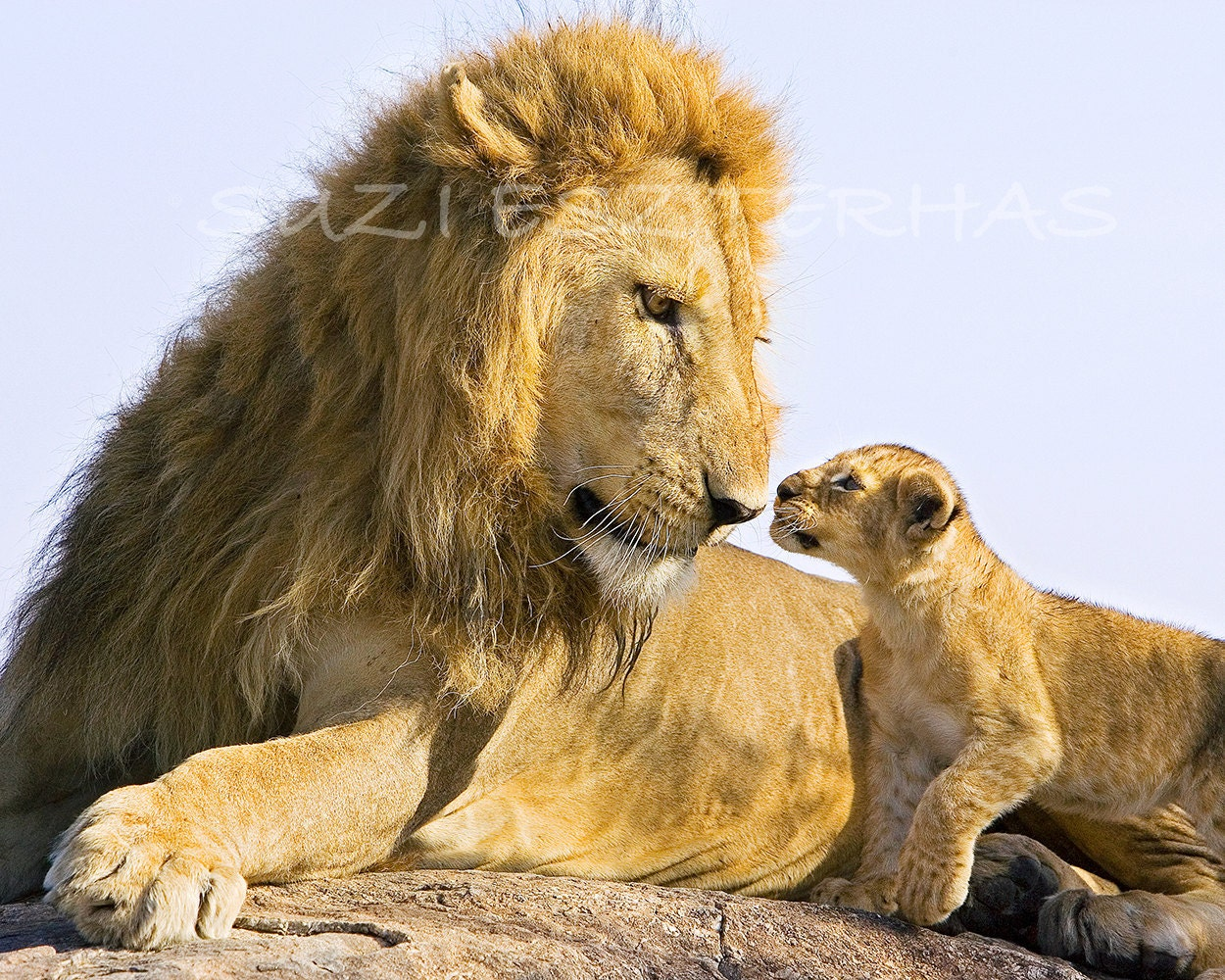 SAFARI BABY ANIMAL Photography Set of 4 Photos by ...