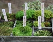 Japan Nature Photograph, print photo 5x7 inch (13x18cm), green moss garden, woodland forest, natural history