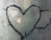 Love Tree. Art Photograph 12.7x12.7cm