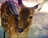 Portrait of Baby Deer. Photograph 10x15cm