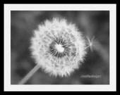 Dandelion Wish Flower (B&W)