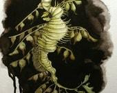 Leafy Sea Dragon - Original Illustration