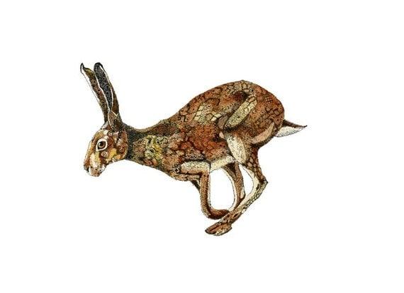 Giclee Hare Print Golden Hare art print 11.7x16.5 illustration