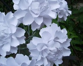 The Peony -  Handmade Paper Flower - White - set of 10 - Stems Included.
