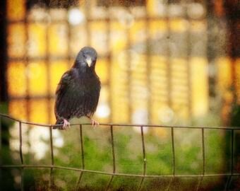 Starling. Bird. print 8x8