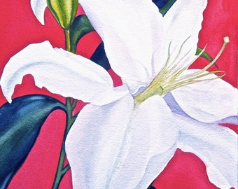 White Lilly with Red