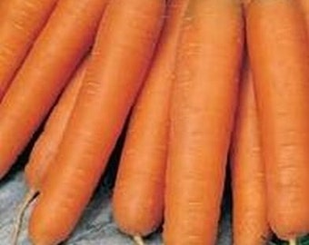 Carrots Scarlet Nantes 550 Seeds 700mg