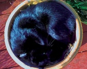 Sleeping Kitty In A Flower Pot - 11x11 photo