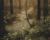 Forest Print (Human Nature) - Discounted 20x25 Artist Proof