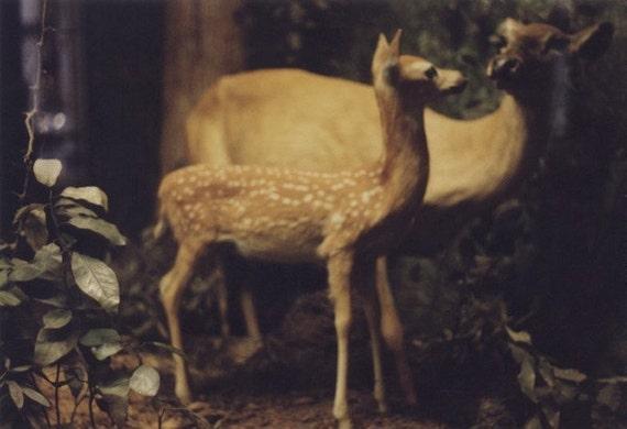 Deer Print (Human Nature)
