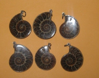 Wholesale Lot of 6 Morocco Ancient Ammonite Fossil Pendants