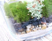 DIY Live Moss Terrarium Kit with easy instructions (PLUS-Free Bonus Moss Variety)