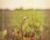 A Country Walk Vintage Purple Flower 11 x 14 print