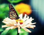 Butterfly and flower 8x10 art print Midwest Indiana Art
