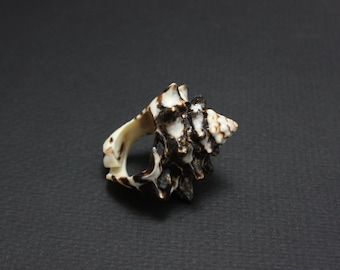 Real Conch Sea Shell Ring  - size 5-9     Ready to ship