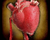 Fine art photograph - You pinned my heart - 6x6 print