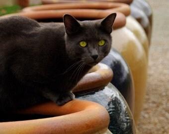 Cat on Terracotta