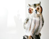 Vintage Owl Figurine Collectible China Woodland Bird