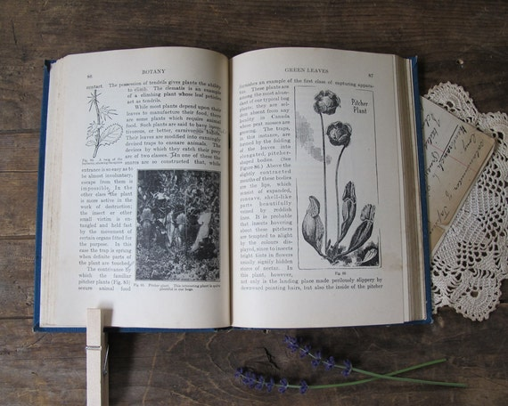 """Antique Natural History Book: """"Botany For High Schools"""", 1928"""