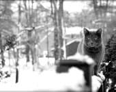 photograph Fuzzy Feline Fine Art gifts for woman men man