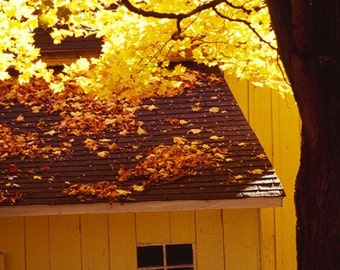 photograph Yellow barn Fine Art gifts for woman men man