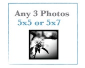 SALE Any Three 5x5 or 5x7 Photos