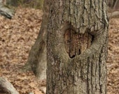 Nature Photography, Rustic Fine Art Print - Heart Shaped 11 x 14 Tree Heart Nature Photography - JLMPHOTOGRAPHS