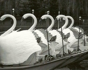 Boston Photographs, Boston Swan Boats, Black and White Photograph, New England Photography, Boston Home Decor, Black and White Deco, Office