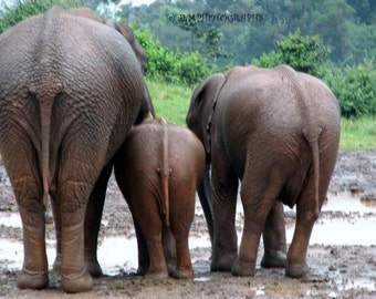 Elephant Decor, Photograph Kenya Africa, Childs Room Decor, Playroom Decor, Funny Photos, Animal Photography, Nursery Decor, Butts Elephant