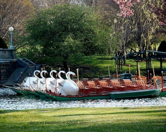 Swan Boats Boston, Boston Prints, Small Wall Art, Fine Art Photograph, New England Prints, Home Decor, Boston Art, Living Room Art, Bedroom