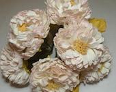White Peach Carnations