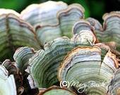 Tree Fungi 8x10 Fine Art Print