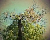Green Tree of Mysticism 8x12 Photography Print, Woodland Photo, Whimsical Wall Decor, Forest