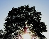 Sunlit Tree 5x5 Photography Print, Woods, Woodlands, Silhouette, Rustic, Sun, Sunshine, Fine Art by thebqe
