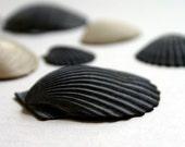 Seashells Found by the Seashore 8x12 or 8x10 Photography Print, Nautical Wall Decor, New York Ocean Photo