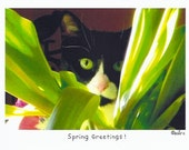 Spring Greetings Photo Story Card