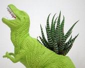 Dylan the Tyrannosaurus Rex Planter & Succulent
