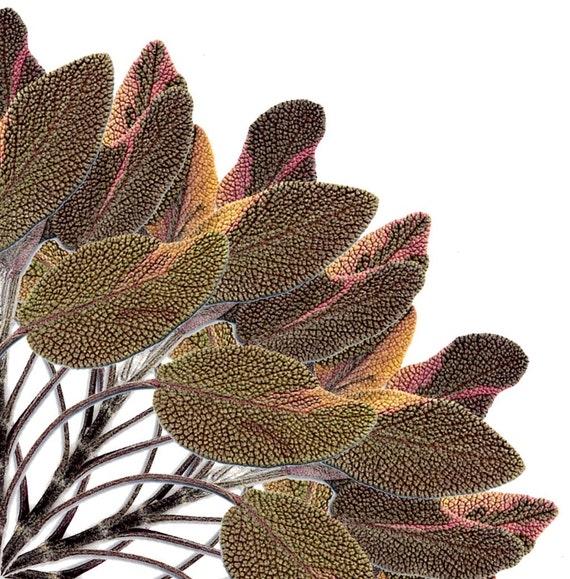Kaleidographic Bouquet Sage