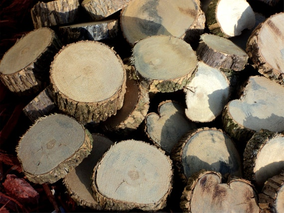 80 Beautiful Florida Oak Branch Slices,  Miniature Tree Stumps, Crafts And Home Decor, Mixed Size Lot