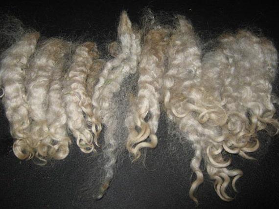 1 oz. Washed Lincoln Long Wool Locks / Fiber for Spinning / Fiber Artist