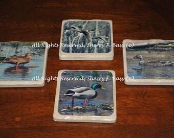 Duck Coasters, 4 Different Mallard Duck Coasters