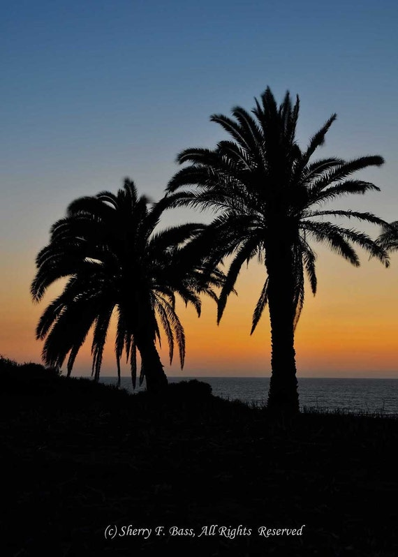PALM Trees at SUNSET PHOTOGRAPHY, Various Sizes