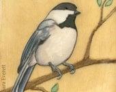 Perched Chickadee - 5x7 Fine Art Print