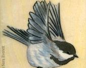 Chickadee Flight - 5x7 Fine Art Print