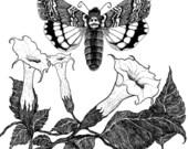 Deathhead Hawkmoth - Blank Card