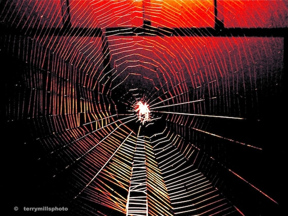 Photo of Ghost Spider and his creepy home  In Red Black 8x10